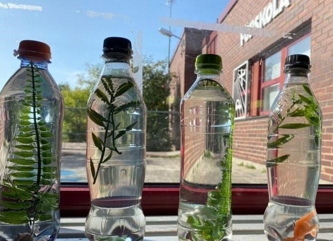 PET-flaskor med gröna blad i ett fönster på förskolan